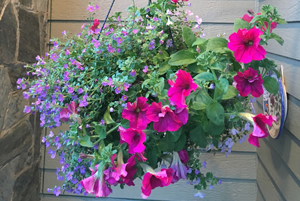 Click For Ideas For Hanging Baskets