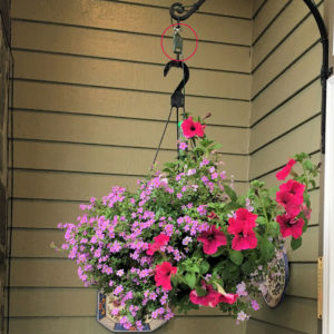 plant booster used with hanging basket
