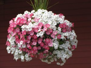 hanging basket example