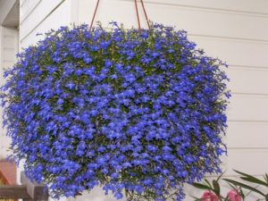 Ideas for hanging baskets