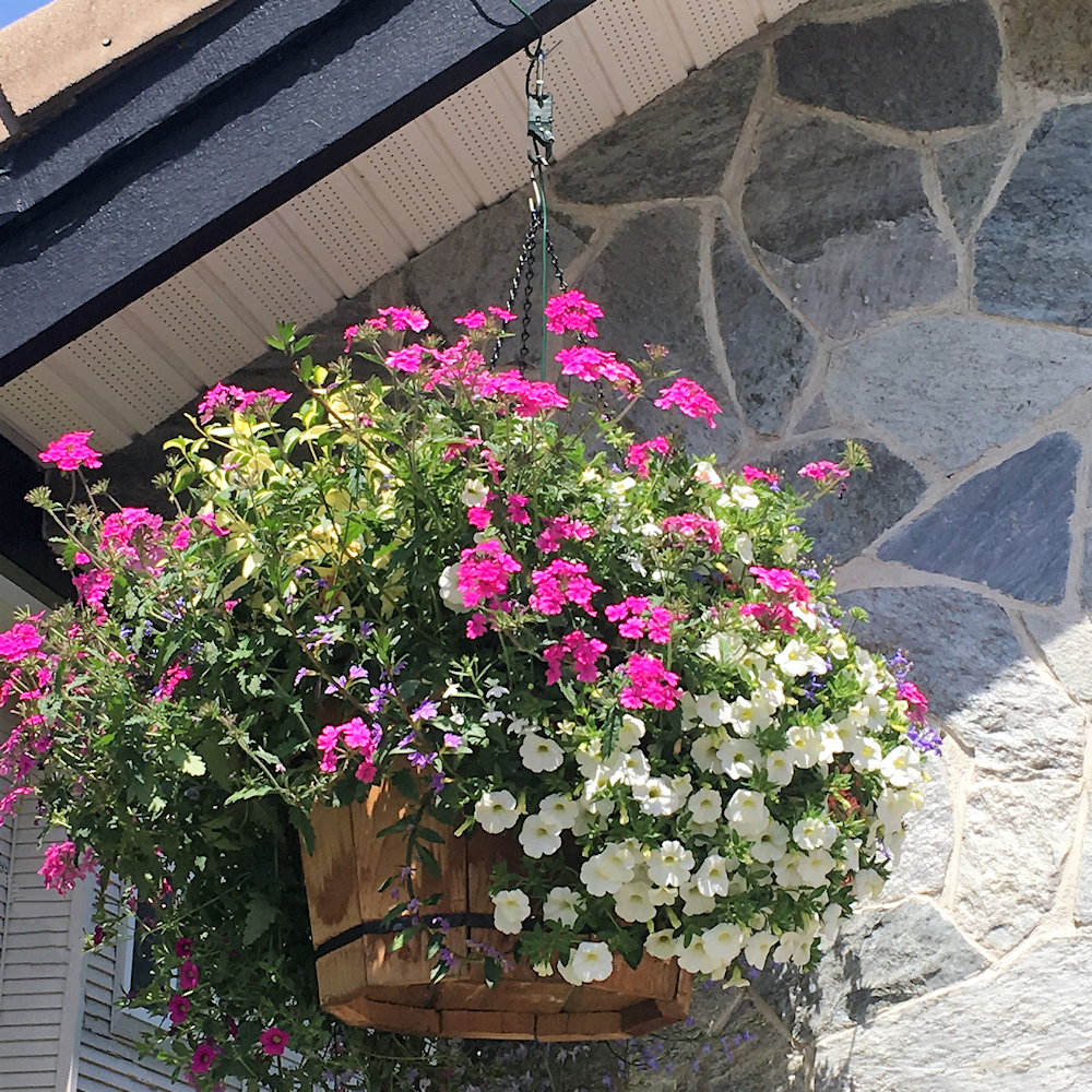 Make Your Self Watering Hanging Baskets Worry Free By Using The Plant Booster