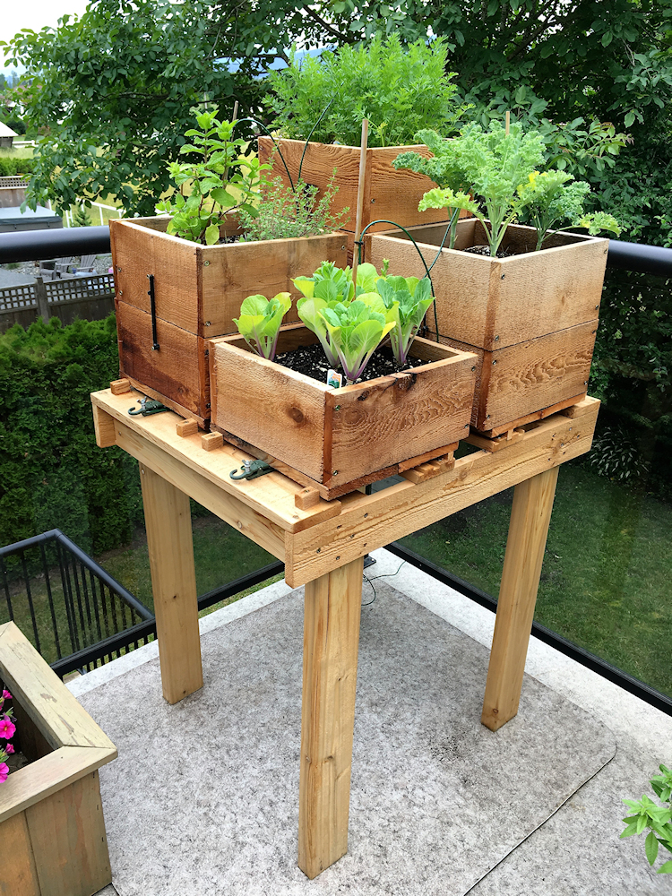 Ideas For Container Gardening Amp Drip Irrigation For Pots