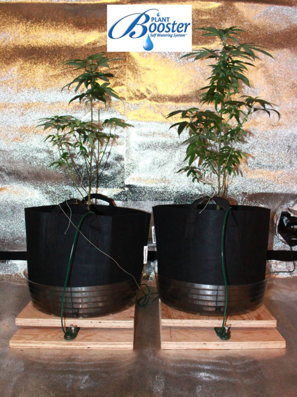 Pot plants growing with Plant Booster setup
